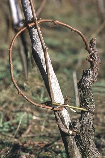 vignobles marcillac